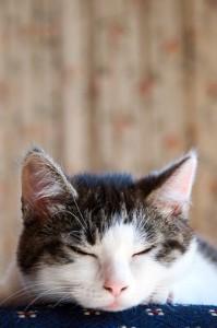 Must. . . . Sleep. . . . Now. . . .